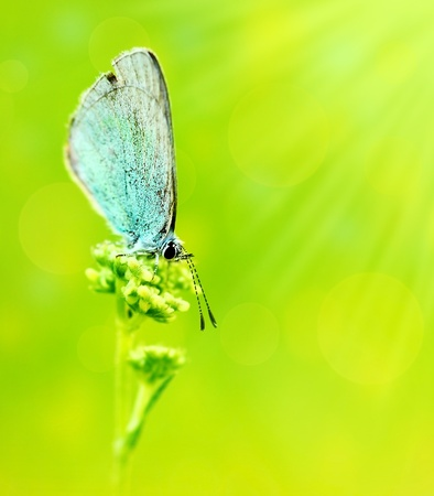 Beautiful blue butterfly extreme closeup macro, nature life in spring  photo