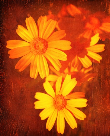 Yellow daisy, abstract floral grunge background with old dirty texture photo
