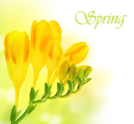 Fresh spring flowers bouquet over green yellow bokeh background with text space Stock Photo - 9179186