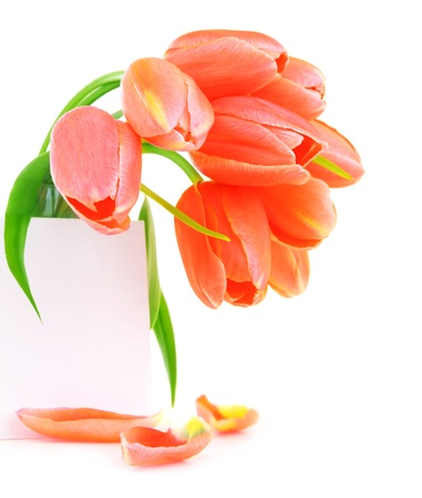 Fresh pink tulip flowers with blank paper greeting card isolated on white background photo