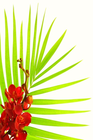 Fresh palm leaves with red orchid isolated on white background, spa floral border photo