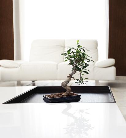 Luxury apartment with stylish modern interior design Stock Photo - 9179227