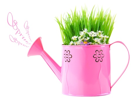 Pink watering can of spring fresh wild flowers isolated on white background photo