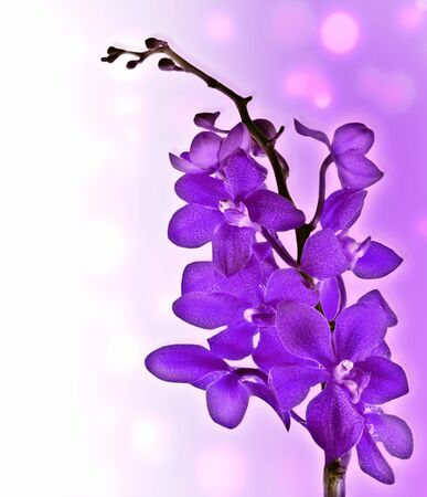 Purple fresh orchid flower with bokeh lights photo
