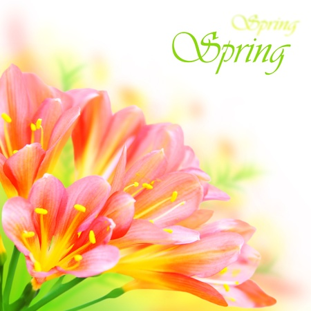 Fresh spring flowers border isolated on white background?