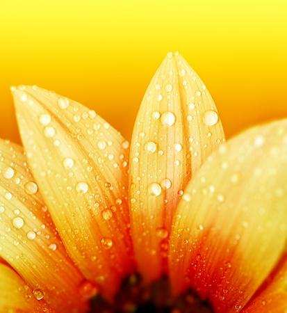 Yellow flower petals, ?macro on flower Stock Photo - 9482377