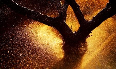?Tree trunk silhouette? ?with water splash & sunset light photo
