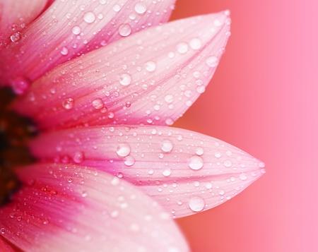 macro: Pink flower petals, ?macro on flower, beautiful abstract background