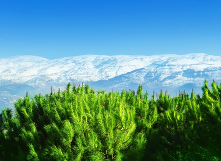 Beautiful mountains landscape with green pine trees forest photo