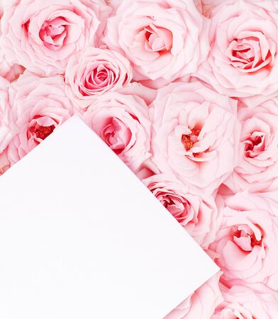 Pink fresh roses background with blank paper greeting card photo