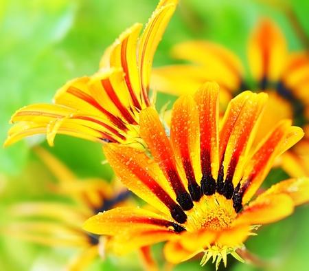 wild flowers: Prachtige verse rode natte bloemknoppen, lente over groene natuurlijke achtergrond, leven