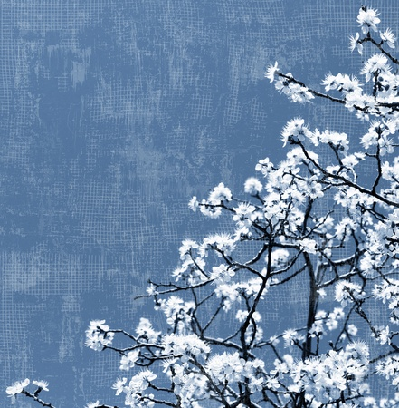 Blooming spring tree background, white flowers over blue sky, textured photo