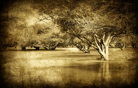 Grunge style picture of old forest with river flood, sepia toned photo