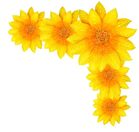 yellow daisy: Fresh yellow flower border, isolated over white background