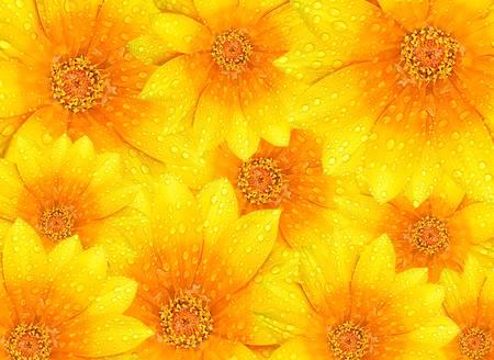 Fondo de flores frescas de color amarillo con puntales de Roc�o, concepto de naturaleza hermosa Foto de archivo - 9972808