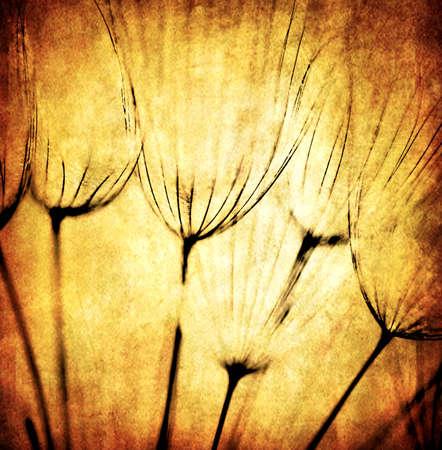 Grunge abstract dandelion flower background, soft focus Stock Photo - 9996955