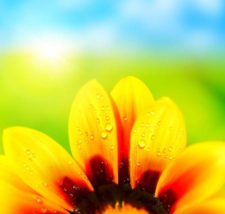 自然カラフルな抽象的な背景、ウェット黄花デイジーの花、マクロの詳細