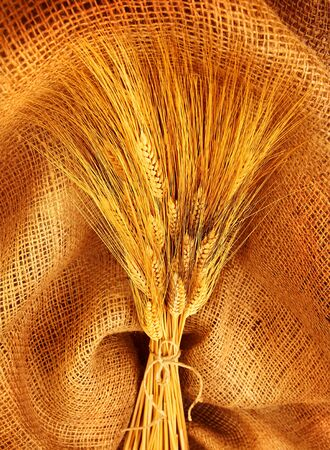 Wheat bouquet over canvas fabric, studio shot, fruitful harvest concept photo