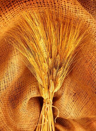 Wheat bouquet over canvas fabric, studio shot, fruitful harvest concept Stock Photo - 10184134