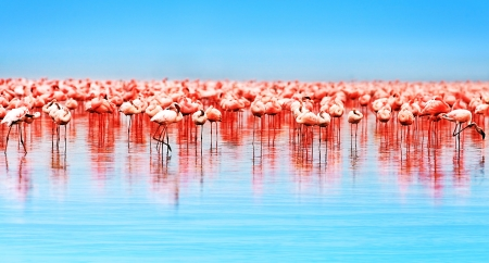 Flamingo birds in the lake Nakuru, African safari, Kenya Stock Photo - 10325246