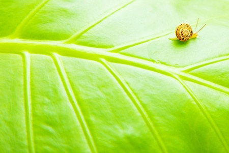 Green leaf natural background with tiny snail photo