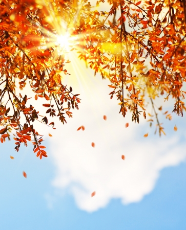 wind down: Beautiful autumn tree border with falling down old leaves over blue cloudy sky, abstract background, nature at fall