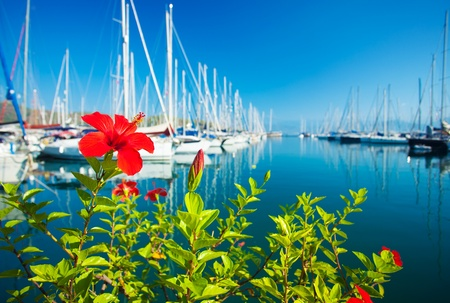 Red flower at the yacht port, over blue clear sky, row of luxury sailboats reflected in water, selective focus