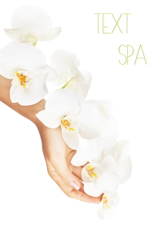 orchid isolated: Fresh white orchid in female hands, woman holding flower, isolated on white background, beauty, health care and spa concept