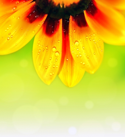 Abstract beautiful flower, colorful floral background , wet yellow petals border, daisy plant with bokeh ,nature macro details  photo