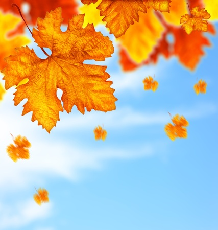 leaf close up: Beautiful autumn tree border with falling down old leaves over blue cloudy sky, abstract background, nature at fall