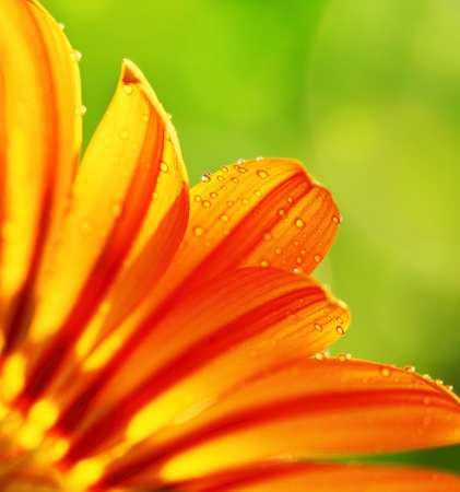 Abstract beautiful flower, colorful floral background , wet yellow petals border, daisy plant with bokeh ,nature macro details