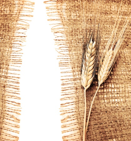 harvest time: Wheat border over canvas background, harvest time, thanksgiving holiday decoration