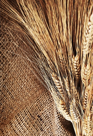 Wheat border over canvas background, harvest time, thanksgiving holiday decoration Stock Photo - 10942196