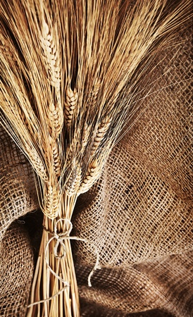 Wheat bouquet over canvas background, harvest time, thanksgiving holiday decoration Stock Photo - 10942376