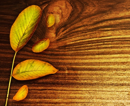 Autumn leaves over old wood background, nature at fall, abstract border with copy space Stock Photo - 10994016