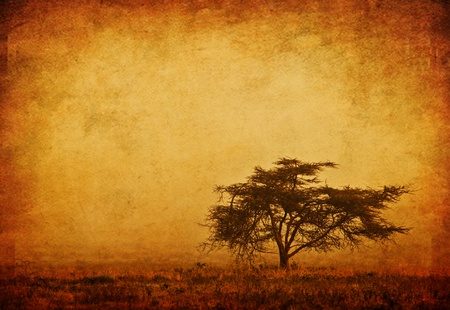 africa safari: Lonely tree in the mist, grunge background, nature autumn season, african landscape in the morning, sepia toned