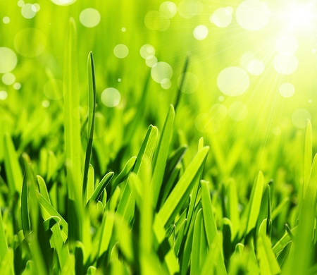 Fresh green grass abstract background, bright field with sunny bokeh, beutiful nature at spring  photo