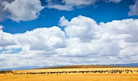 safari game drive: South African struzzo, fattoria degli uccelli, un bel paesaggio naturale con gli animali, ecoturismo, viaggi avventura, safari della fauna selvatica