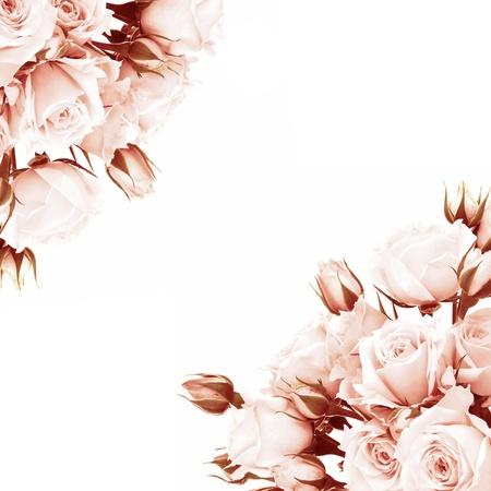 esquineros de flores: Fresca rosa marco de las rosas, hermosas flores aislado en blanco, la composici�n de la esquina, se levant� de vacaciones de regalo, el concepto de amor Foto de archivo