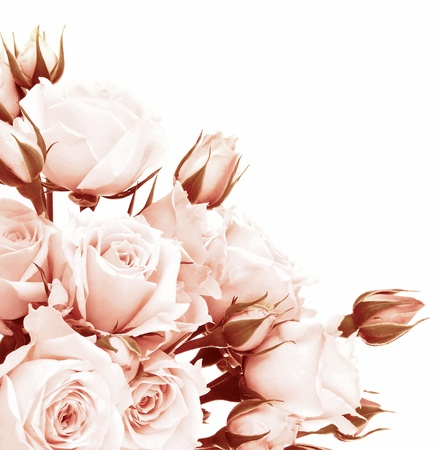 rosas blancas: Frontera con rosas de color rosa fresca, hermosa aislado en flores blancas, la composici�n de la esquina, se levant� de vacaciones de regalo, el concepto de amor