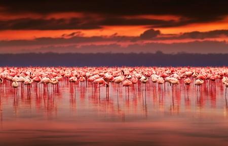 자연 서식지, 아프리카 풍경, 자연 케냐, 호수 나 쿠루 국립 공원 보호 구역에서 이국적인 조류의 아름다운 일몰, 무리에 호수에 아프리카 플라밍고