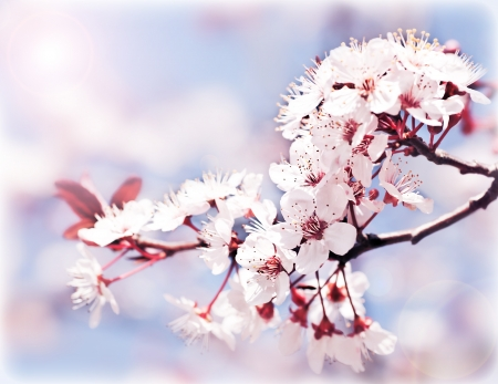 Blooming tree at spring, fresh pink flowers on the branch of fruit tree, plant blossom abstract background, seasonal nature beauty, dreamy soft focus picture  photo