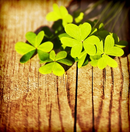 Fresh clover leaves over wooden background, green spring floral border, lucky shamrock, St.Patricks day holiday symbol photo
