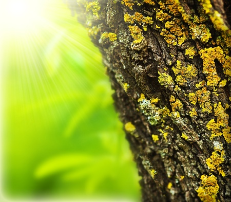 Spring forest abstract background, close up on old tree trunk, sunny springtime day, beautiful nature macro details, fresh green leaves  photo