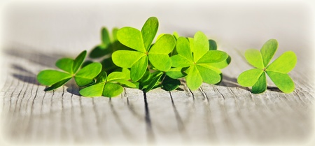 Fresh clover leaves over wooden background, green spring floral border, lucky shamrock, St.Patricks day holiday symbol