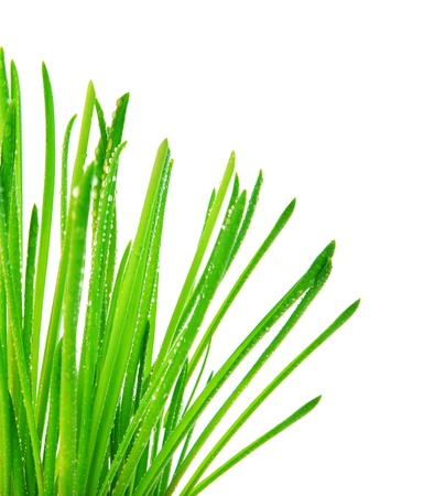 Green grass border, fresh spring herbal leaves, abstract wet floral plant isolated on white background, springtime nature photo