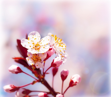 Blooming tree at spring, fresh pink flowers on the branch of fruit tree, plant blossom abstract background, seasonal nature beauty, dreamy border, soft focus picture photo