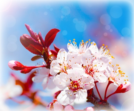 Blooming tree at spring, fresh white flowers on the branch of fruit tree, plant blossom abstract background, seasonal nature beauty, dreamy soft focus picture of springtime photo