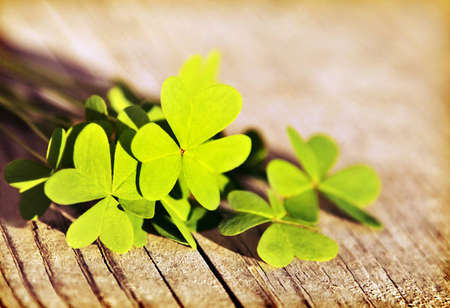 Fresh clover leaves over wooden background, green spring floral border, lucky shamrock, St.Patrick's day holiday symbol photo