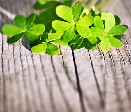 木製の背景、緑の春の花のボーダー、ラッキー シャムロック、聖パトリックの日ホリデー シンボルを新鮮なクローバーの葉します。